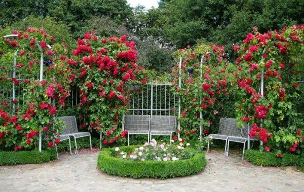 Можно использовать арки для подвесных роз