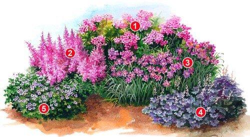 Схема посадки многолеток в саду