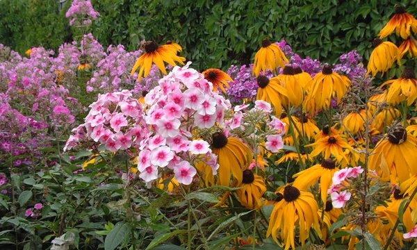 Необходимо также обратить внимание на высоту растений, при создании цветника