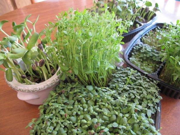 Перед посадкой салата необходимо убедиться в пригодности семян