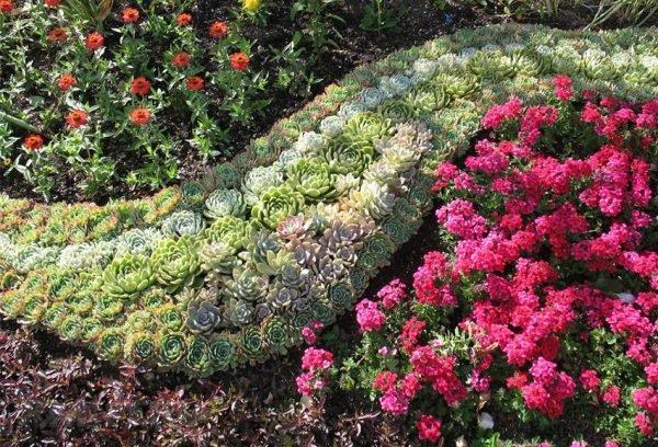 Клумба, сделанная ковровым покрытием, из многолетних цветочков