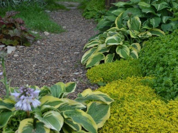 Как и все растения, многолетние цветы необходимо изредка прореживать