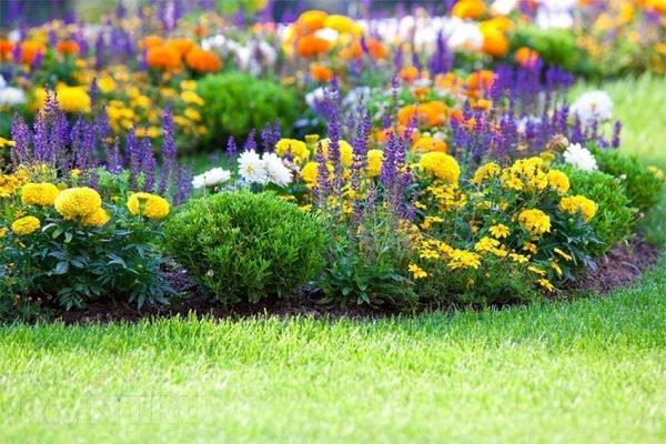 Благодаря большому выбору сортов, можно высадить множество разных цветников