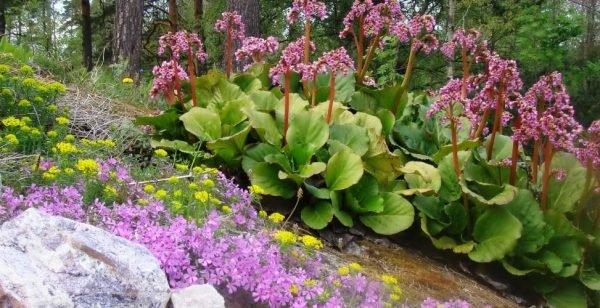 Для тенелюбивых растений предпочтительна легкая, рыхлая, питательная почва