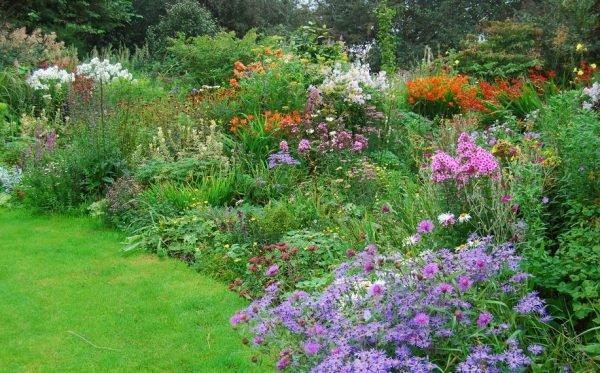 Цветник из садовых неприхотливых многолетних растений