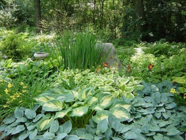 Для тенистого цветника необходимы растения, которые переносят недостаток солнечного света