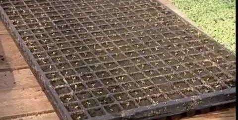 Прежде чем садить однолетки, лучше сделать рассаду