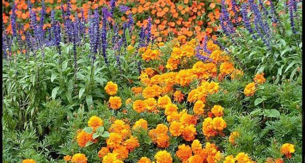 Большинство дачников предпочитают садить в саду именно однолетние сорта цветов