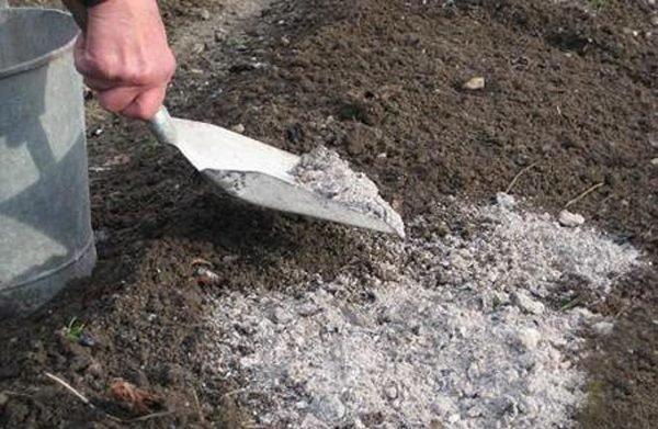 Как происходит подкормка почвы золой