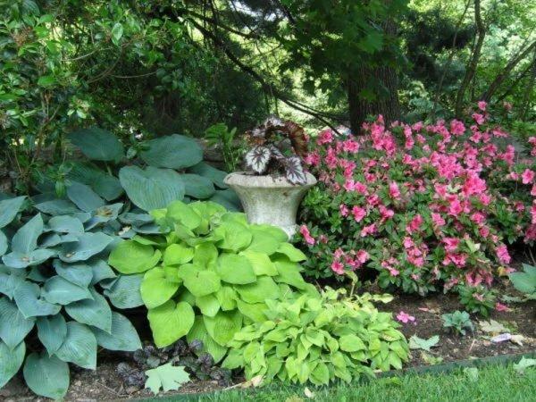Многолетники составляют большинство садовых растений