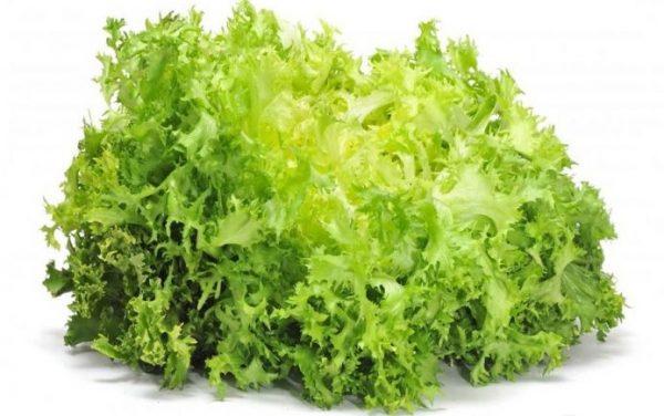 Листья салата Фризе обладают легкой горчинкой