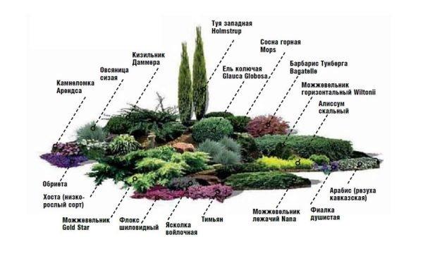 Схема посадки оригинального цветника