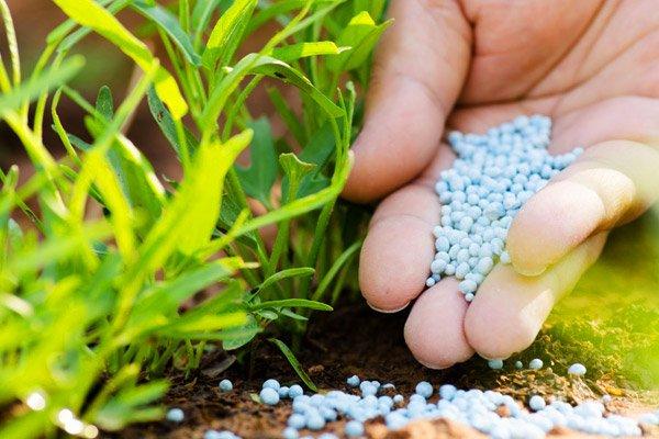 Удобрение азотом почвы для дерева