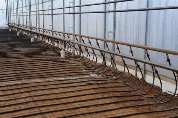 Строительство водяного отопления в теплице