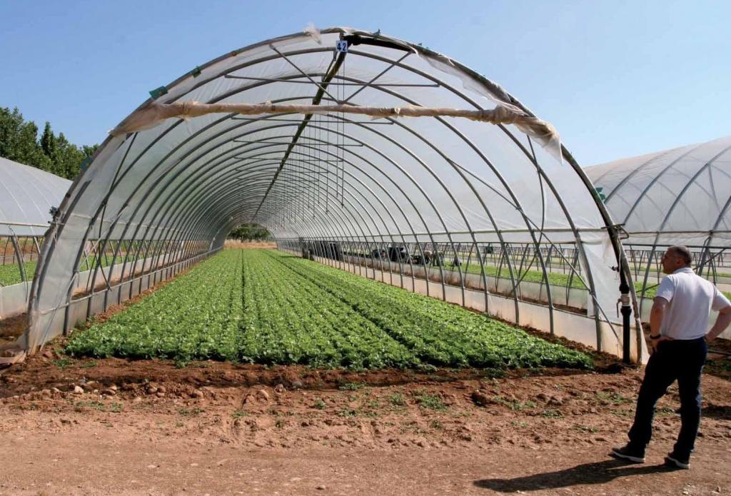 Что выращивать в теплице зимой