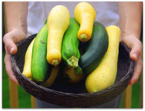 Существует множество видов кабачков, различаются по цвету, размеру и вкусу
