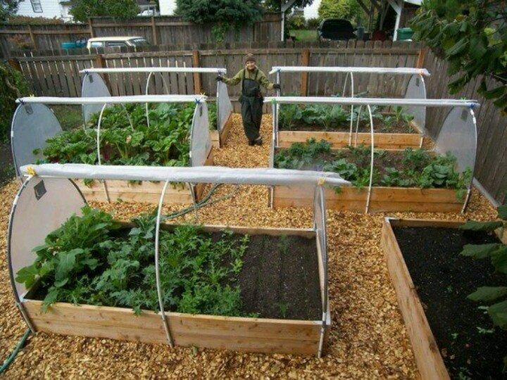 Выращивание овощей в мини-парниках
