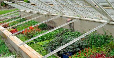 Выращивание цветов и овощей в парнике из рам