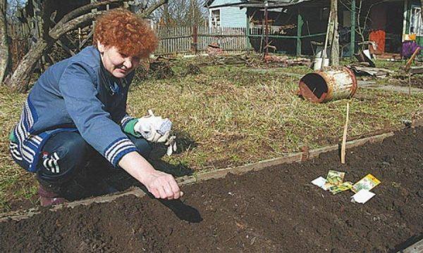 Кабачки можно сажать черенками или семенами