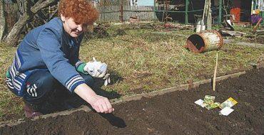 Основная подкормка осуществляется в первый период выращивания