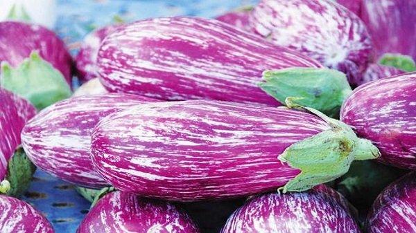 Урожай фиолетовых баклажанов на столе