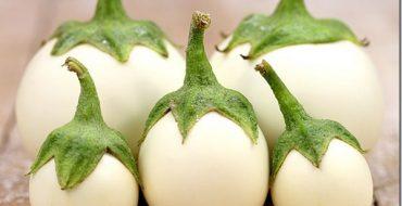 Урожай белых баклажанов на столе