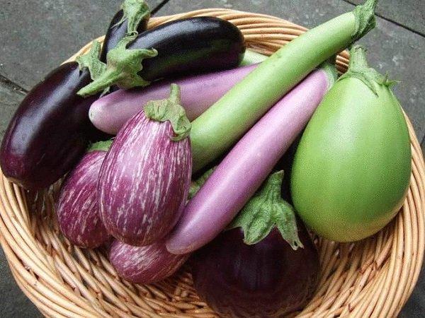 Урожай разных баклажанов с грядки