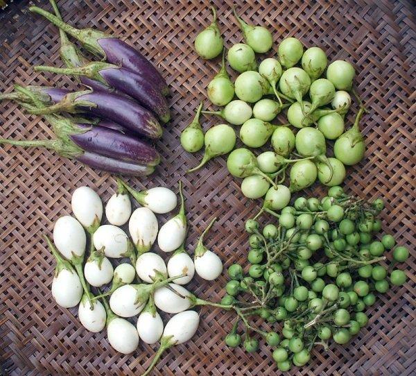Урожай маленьких баклажанов в корзине