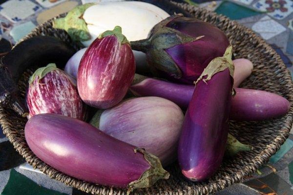 Баклажаны сорта Фиолетовое чудо