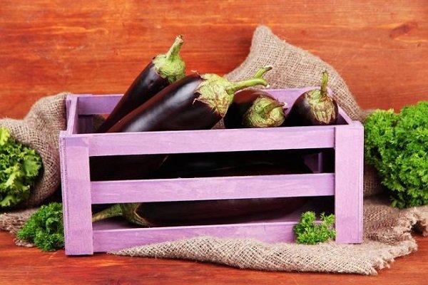 Урожай баклажанов в ящике