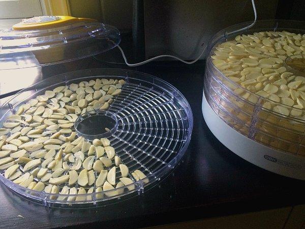 Сушка чесночных пластинок в электросушилке для овощей