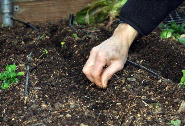 Подготовка места под посадку бобовых культур