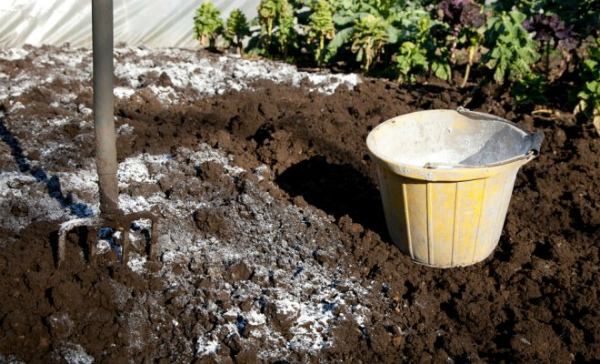 Процесс известкования почвы под чеснок