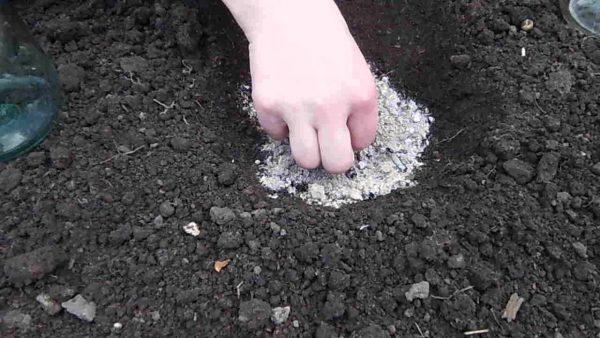 Удобрение почвы непосредственно перед посадкой играет важную роль