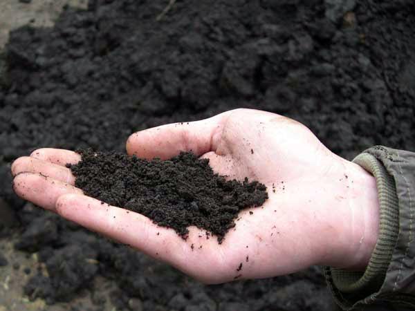 Торф для мульчирования почвы