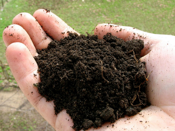 Почва для чеснока обогащается осенью