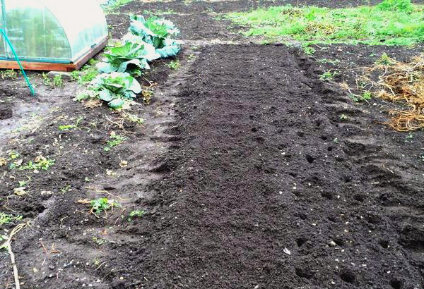 Выбор места под чеснок после сбора урожая овощей