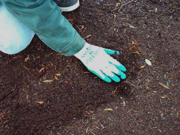 Подготовка почвы и ее отдых перед посадкой
