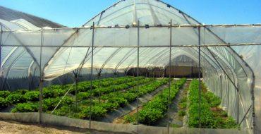 Легкие пленочные тепличные сооружения для фермерства