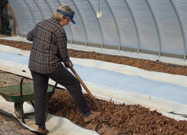 Обеззараживание почвы перед посадкой