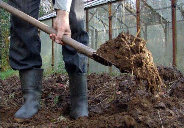 Внесение нового слоя грунта под посадку чеснока