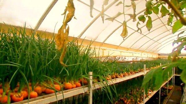 """Выращивание овощей в подземном """"термосе"""""""