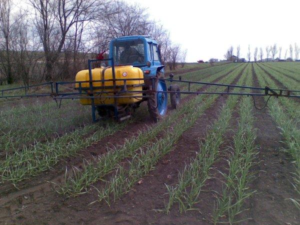 Механизация процессов выращивания чеснока
