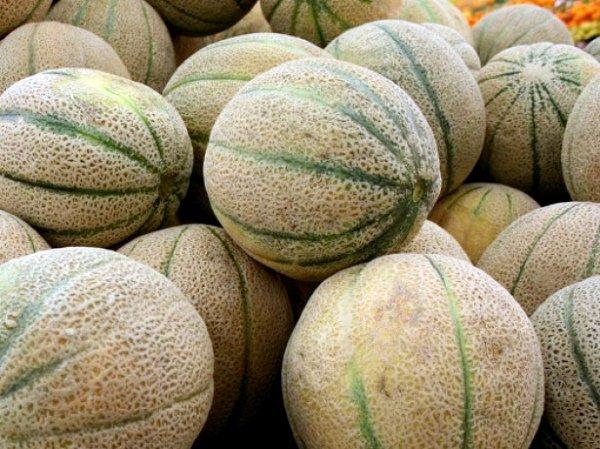 Спелые плоды дыни Канталупа
