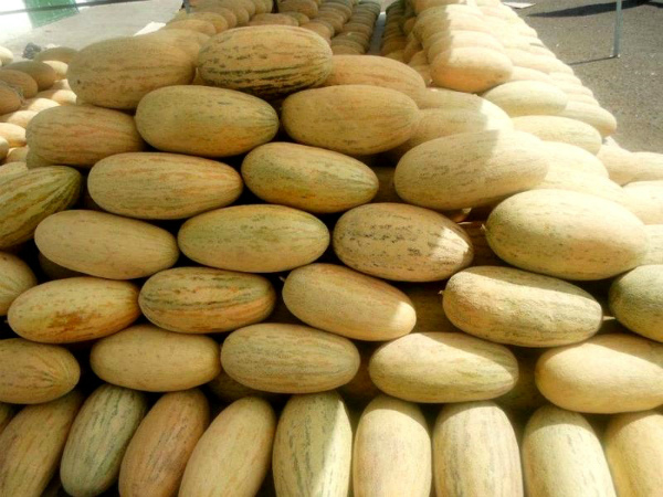 Богатый урожай дыни Торпеда представлен на восточном базаре