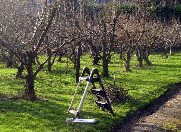 Весенняя обрезка яблонь в саду