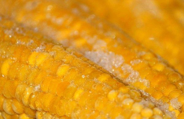 Заготовка целой кукурузы методом заморозки