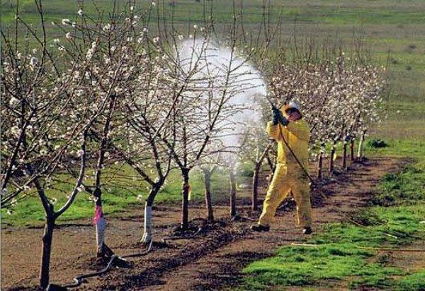 Опрыскивание яблоневого сада от вредителей