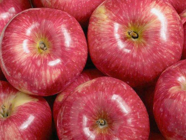 Урожай яблок сорта Мантет