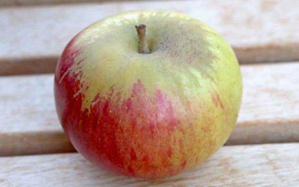 Яблоко Пепин шафранный крупным планом